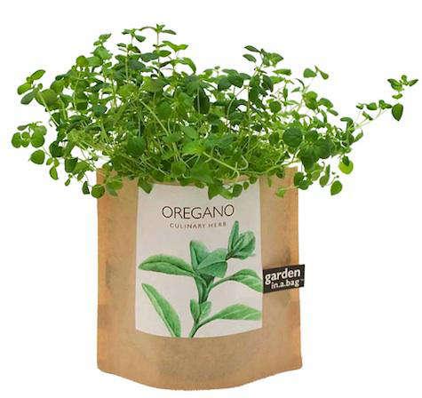 garden in a bag 2