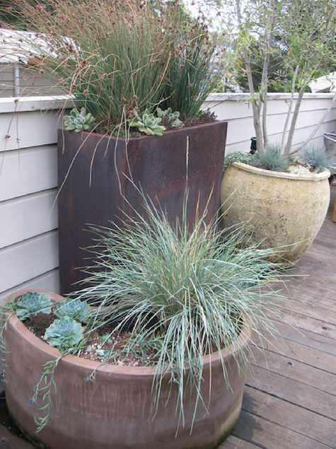 Architect Visit Growsgreen Landscape Design in San Francisco portrait 7