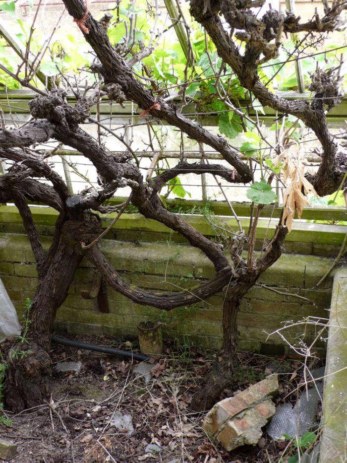How to Restore a Rather Large Kitchen Garden  portrait 6