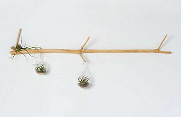 tamarind wall branch 11