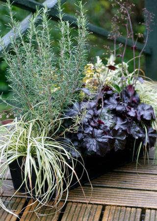 balcony gardener evergreen box