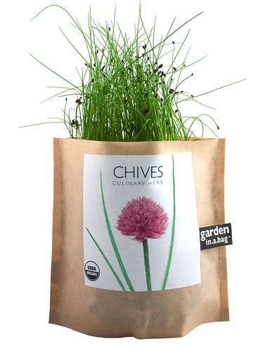 chives in a bag branch