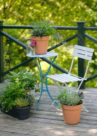 small edible garden balcony gardener
