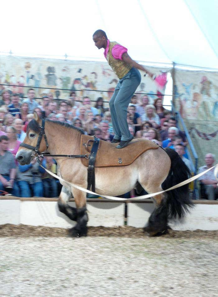 700 12 bibi horse