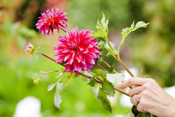 700 backyard bouquets 4