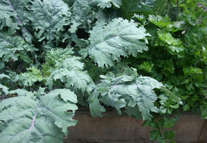 700 gardenista edible garden 071