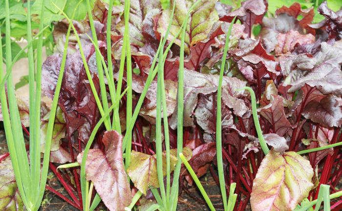700 gardenista edible garden 079a