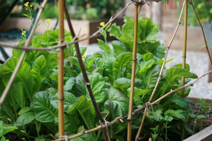 700 gardenista edible garden 096