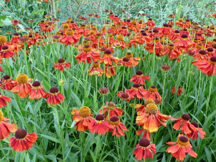 Vitas Sunset Garden portrait 10