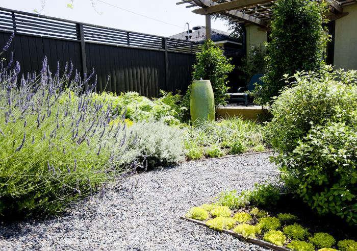 700 succulents gravel path