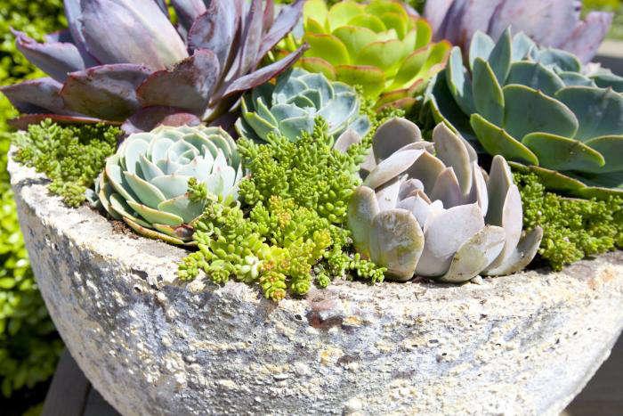700 succulents in concrete planter