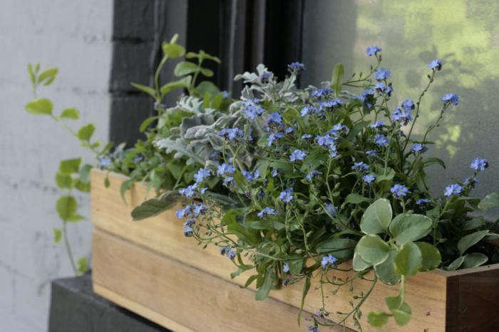 DIY A Window Box Grows in Brooklyn portrait 4
