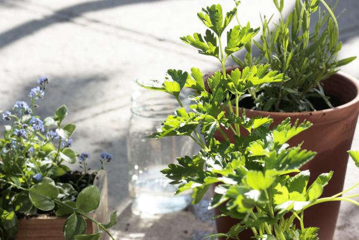 DIY A Window Box Grows in Brooklyn portrait 8