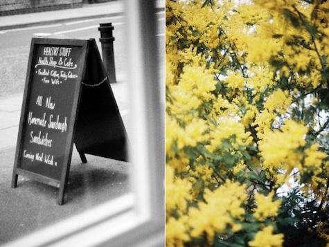 healthy stuff yellow flowers