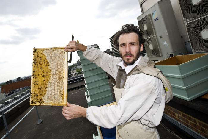The Bees of Buckingham Palace portrait 10