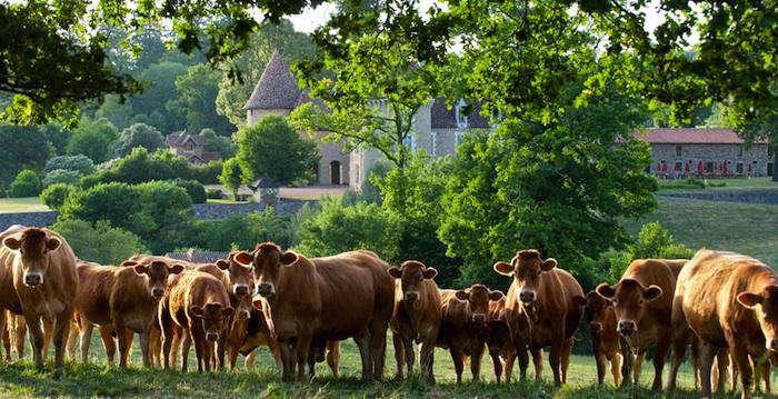 700 domaine etangs cow