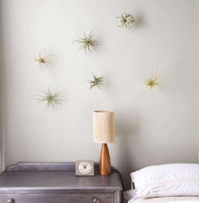rm flora grubb plant hooks1