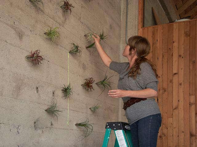 Thigmotrope Satellite Plant Hooks at Flora Grubb Gardens portrait 5