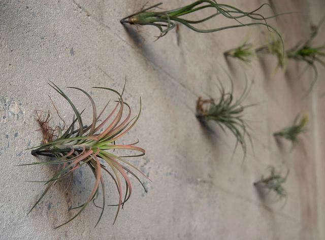 rm floragrubb plant hooks4