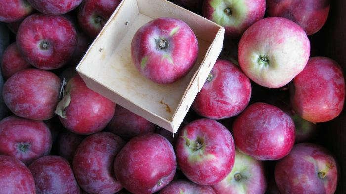 700 700 philo apple farm 51