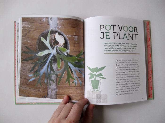 700 joy of plants stag horn by mieke