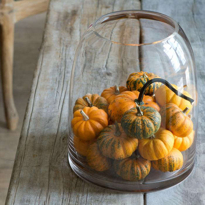 700 mini pumpkin bell jar