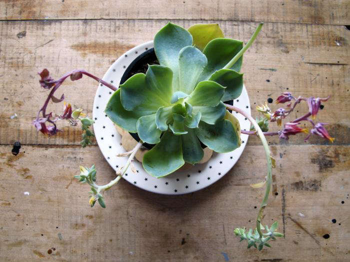 700 succulent by mieke