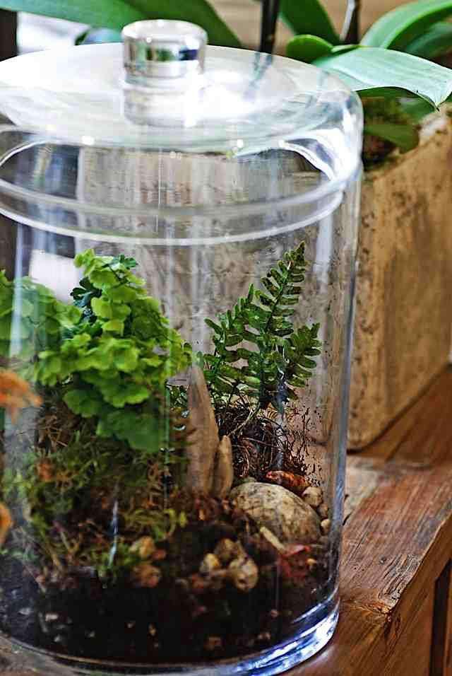 rm centro garden terrarium sm