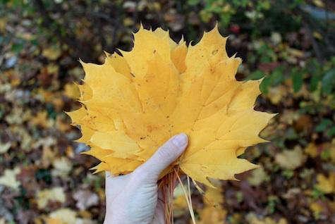 yellow leaves design skool