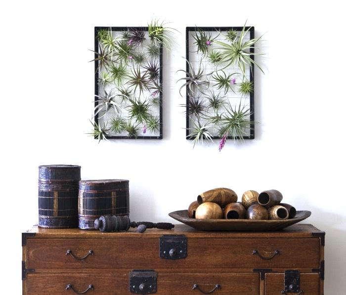 700 air plant fram flora grubb