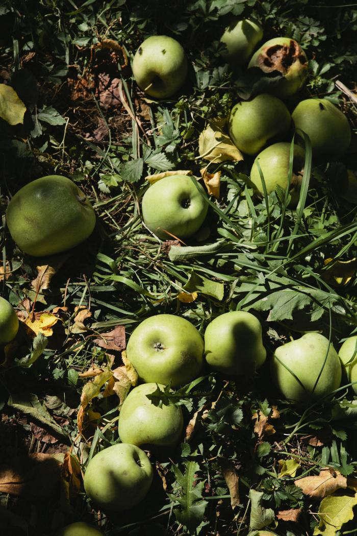 700 nicole franzen green apples