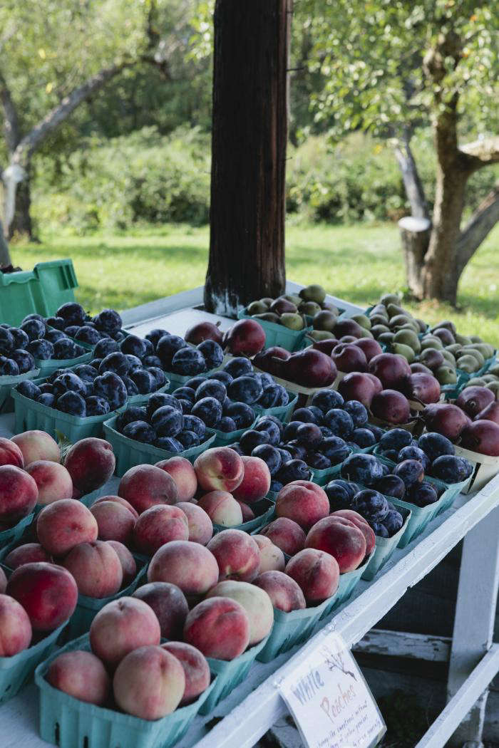 700 nicole franzen stone fruit