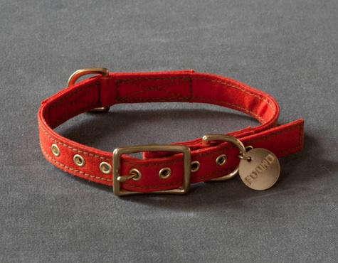 orange dog collar found my animal