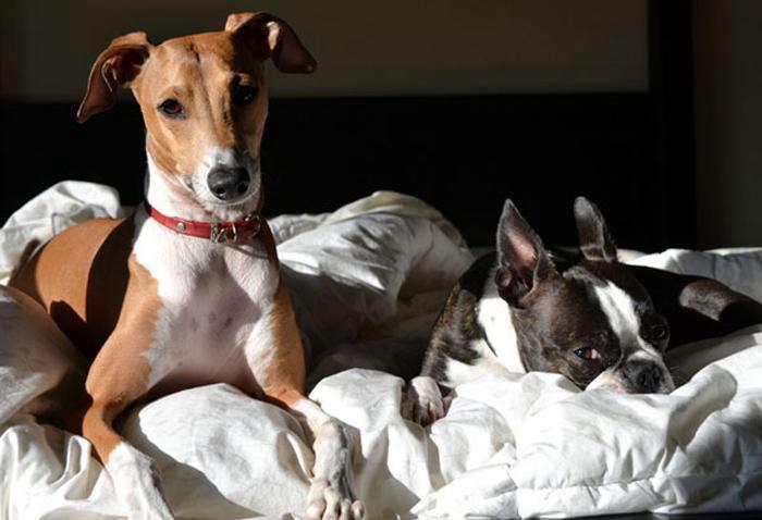 700 tag collar dogs