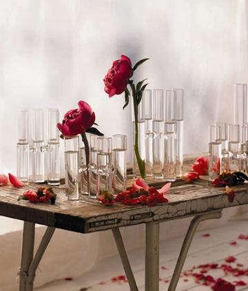 botanik  20  vase  20  with  20  red  20  flowers