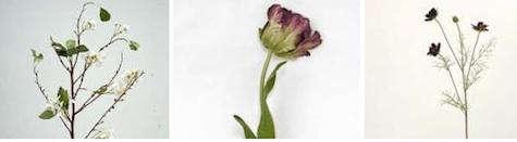 permanent  20  botanicals  20  trio
