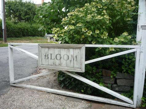 Shoppers Diary Bloom in Sag Harbor portrait 3