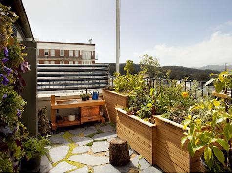 siol  20  studios  20  roof  20  garden  20  1