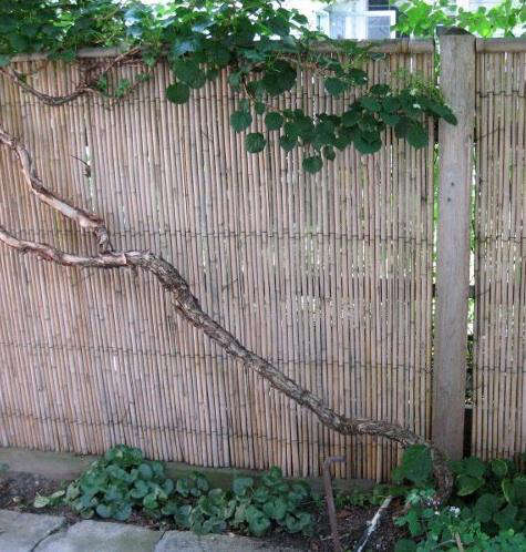 Outdoors Instant Bamboo Fencing portrait 3