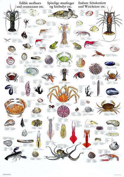 mollusk poster