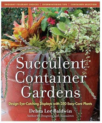 succulent container garden 2