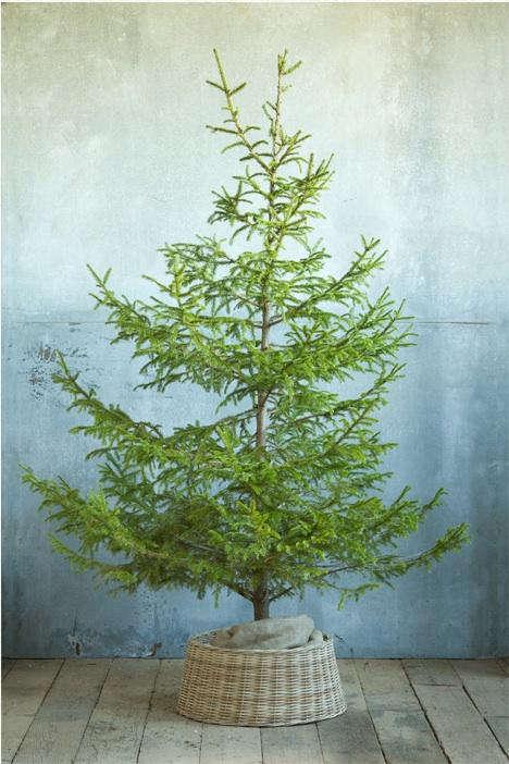 wicker tree skirt 2
