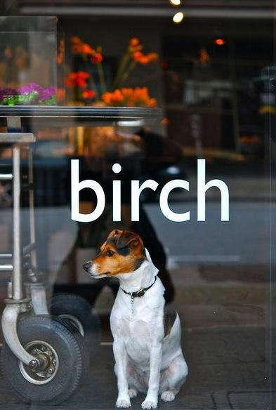 Birch  20  6