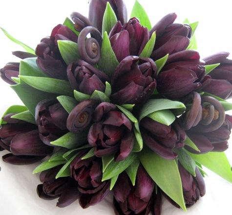 Birch  20  tulips