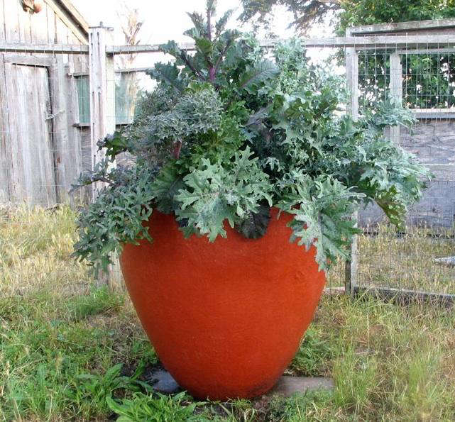 Design Sleuth Colorful Concrete Planters by Mary Martha Collins portrait 4