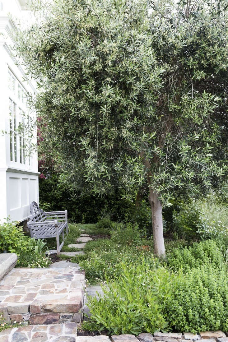 And, the editors were inspired by olive trees of all varieties in all kinds of landscapes. See some of their favorite examples inGenius Garden Ideas:  Landscapes with Olive Trees. Photograph by Nicole Franzen.