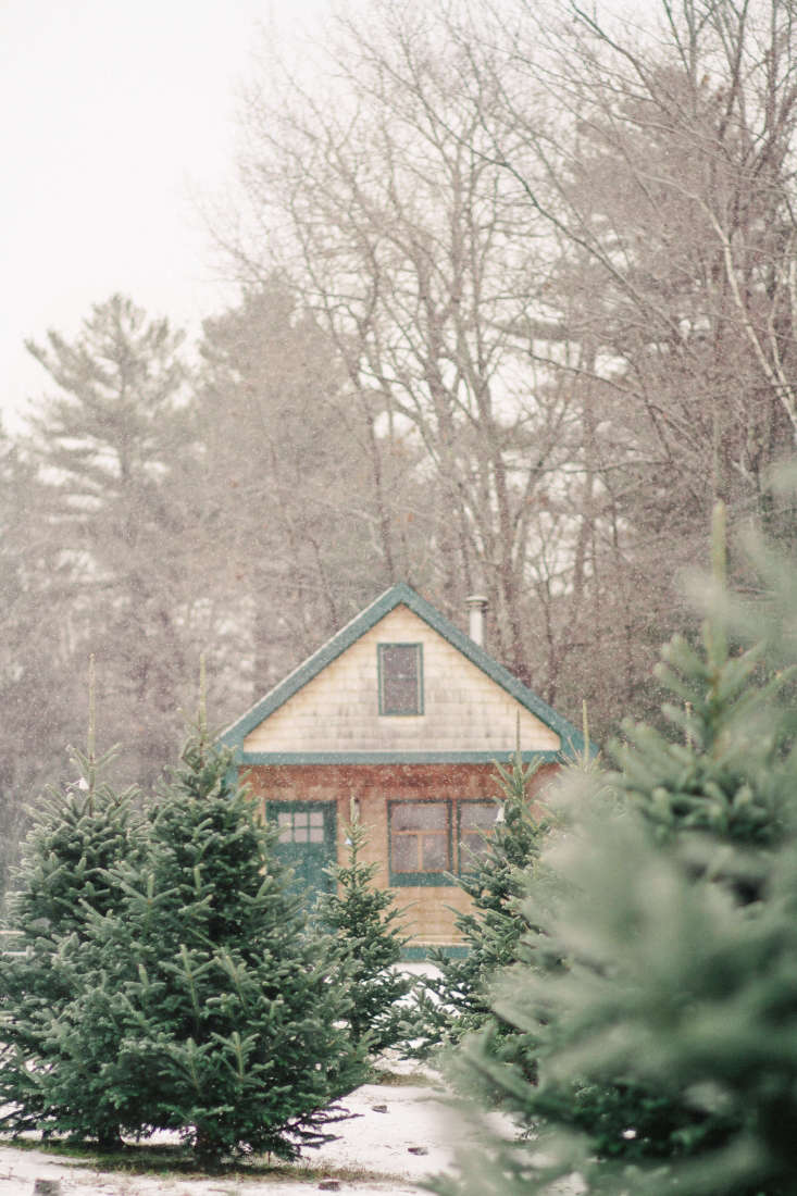 We visit the 0-year-old Dyer-Hutchinson farm in southern Maine (and get tips on how to cut and water a Christmas tree) in Shopper's Diary: A Christmas Tree Farm in Maine.