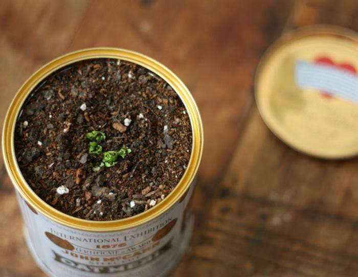 just in time for earth day: a three step guide togrowing garden fresh celery  13