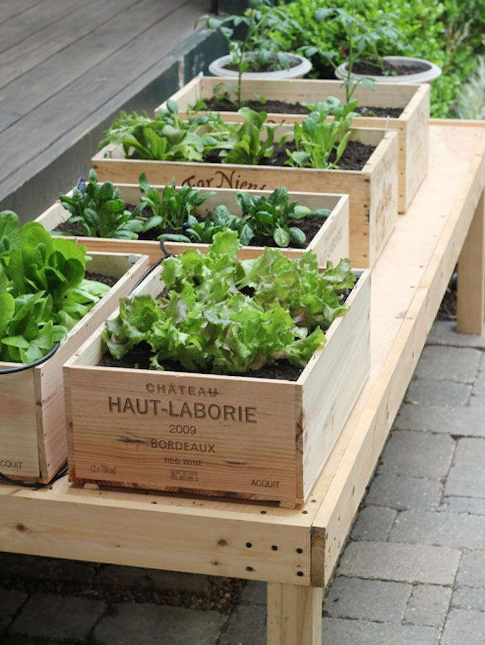step by step: how to make an at home vegetable garden, small enough even for ap 11