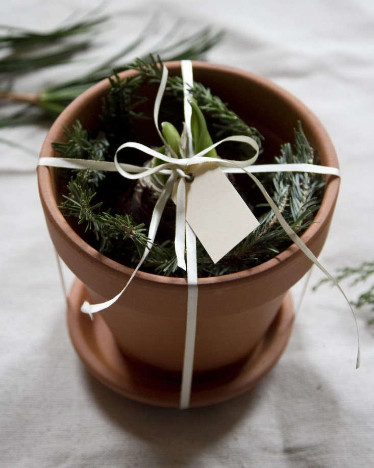 last minute holiday gift: potted bulb   remodelista 11